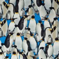 Jersey coton impression numérique pingouins